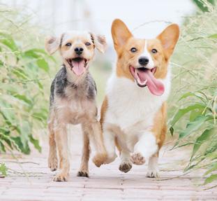 Hunde-laufen.komp.jpg
